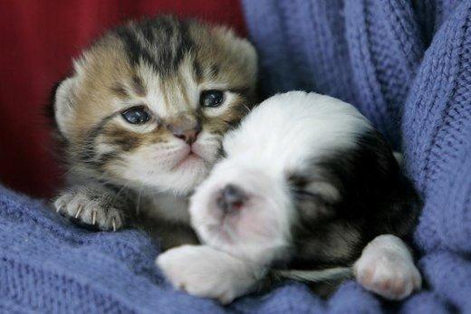 همزیستی مسالمتآمیز حیوانات مختلف با یکدیگر