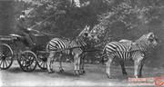 مجموعهای فوقالعاده از عکسهای عجیب و غیر معمول در سالهای ابتدایی قرن بیستم!