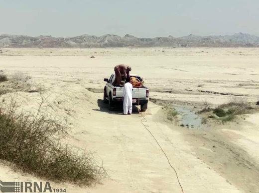 هجوم ملخهای صحرایی به مراتع و طبیعت چابهار