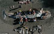 گرسنگی ناشی از تغییرات اقلیم دلیل مرگ ۳ نهنگ از هر ۷ نهنگ به گل نشسته