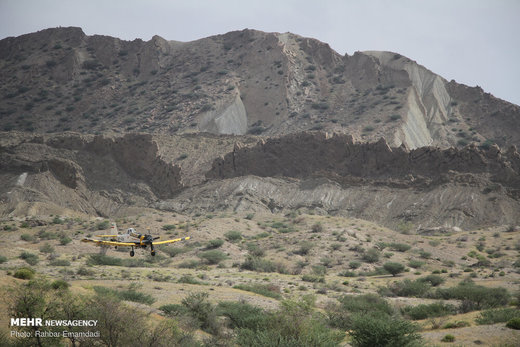 مبارزه با ملخ های صحرایی با هواپیمای سمپاش