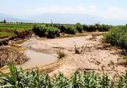 خسارت ۳۰۰ میلیارد تومانی سرمای بهاره به کشاورزی آذربایجانغربی