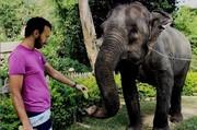 عکس | موز دادن کامبیز دیرباز به یک فیل در تایلند