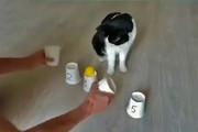 فیلم | بازی با باهوشترین گربه دنیا