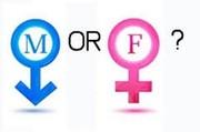 آمار «ترنسها» در کشور/ با آنها چگونه برخورد کنیم؟