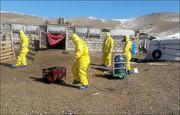 شیوع طاعون در مغولستان