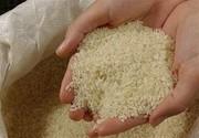 برنج با ارز ۴۲۰۰ تومانی وارد میشود/ کمبود برنج نداریم