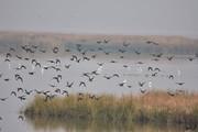 شهرداری شیراز، پرندگان را خانه خراب کرد/ مدیرکل محیط زیست: مانع شدیم