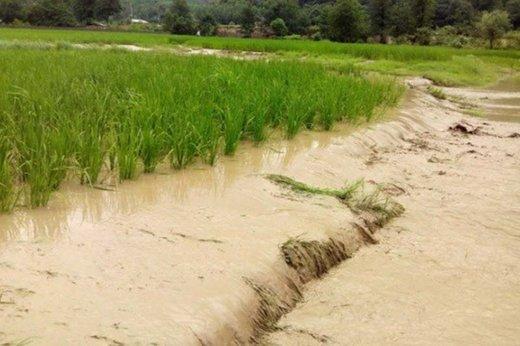 فرماندار سیروان: ۱۰۴ هکتار زمین کشاورزی برای همیشه از دست رفت