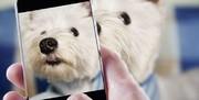 خرید و فروش سگ در فضای مجازی ممنوع است/ نماینده مجلس: قوه قضائیه ورود کند