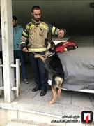 نجات سگ از چاه عمیق در اقدسیه تهران/ عکس