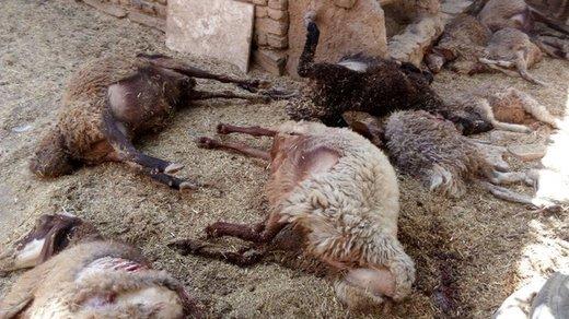 حمله گرگهای گرسنه به روستاهای پارسآباد