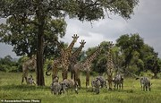 هشدار سازمان ملل درباره نابودی ۱ میلیون گونه جانوری گیاهی در جهان