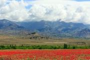 تصاویر | طبیعت دیدنی بهار در مرز ایران و آذربایجان