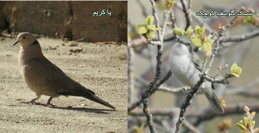 ۲ گونه پرنده جدید در چهارمحال و بختیاری مشاهده شد