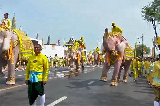 فیلم | ادای احترام فیلها به پادشاه تایلند