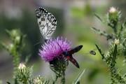 پروانهها به مزارع استان تهران حمله کردند