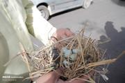 تصاویر | تخریب لانه پرندگان در شیراز