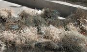 ورود مدعیالعموم به ماجرای تخریب لانه پرندگان