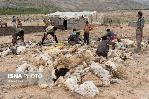سختی زندگی عشایری به روایت تصویر