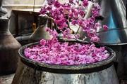 تصاویر | باز هم اردیبهشت و جشن باصفای گلابگیری کاشان