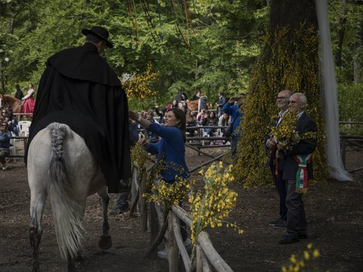 جشن نمادین ازدواج دو درخت سنتی تاریخی روستایی در ایتالیا