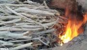 تخریب ۲ کوره زغال غیرمجاز در لردگان