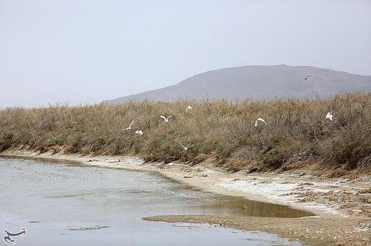 زاینده رود بالاخره به گاوخونی رسید/ورود دو میلیون و ۲۴۱ هزار مترمکعب آب به تالاب