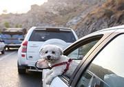 توقیف خودروهای سگگردان در اهواز