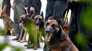 سهم ۱۰ درصدی سگهای مواد یاب از کشفیات مواد مخدر