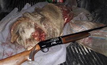 مجازات سنگین برای شکارچی گراز در لرستان