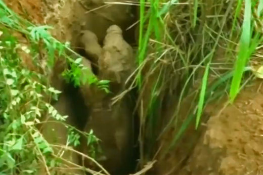 فیلم | عاقبت بچه فیل بازیگوش