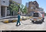 هجوم کرمهای پشمالو به شهری در استان البرز
