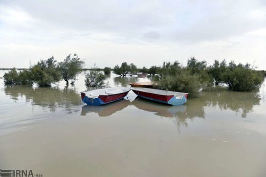 حیات مجدد دریاچه هامون