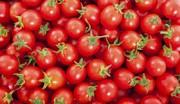 تجارت گوجهفرنگی در کدام کشورها بیشتر است؟