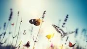 هجوم پروانهها، این بار به شهر کویری مرکز ایران