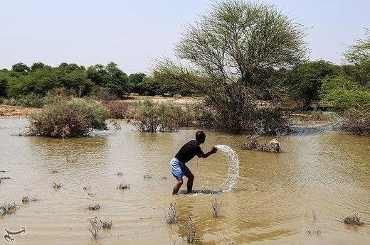 تلف شدن هزاران ماهی در مناطق سیلزده خوزستان