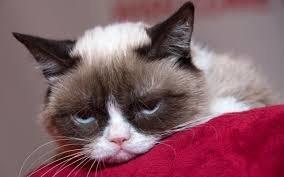 گربه مولتی میلیونر اینستاگرامی مرد/ عکس
