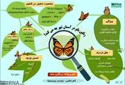اینفوگرافیک | پروانهها در تهران چه میکنند؟