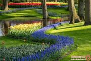 شکفتن ۷ میلیون لاله رنگارنگ در بزرگترین باغ گل هلند