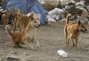 حمله سگ ولگرد به دانشآموزان در بندر ترکمن
