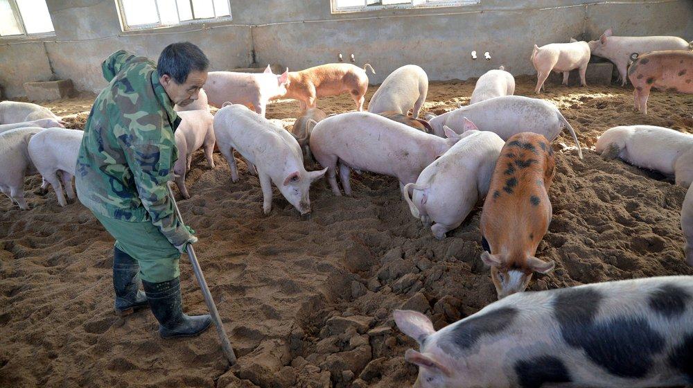حمله آمریکا به خوکهای چینی