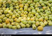 سیب درختی رکورددار گرانی شد/ نرخ تورم در کالاهای اساسی