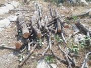 مجرم قطع درختان جنگلی منطقه کرکی دستگیر شد
