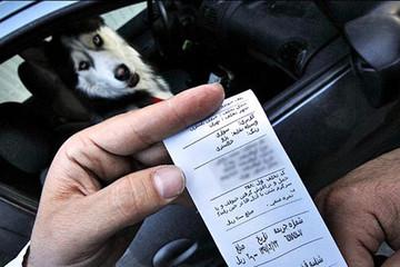 برخورد پلیس راهور زنجان با سگ گردانی در خودرو