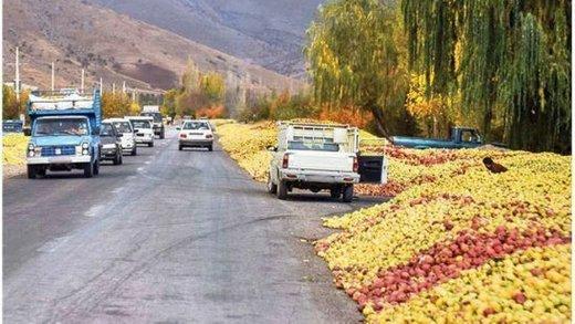 انباشت سیب صنعتی در کنار جادههای آذربایجانغربی ممنوع شد
