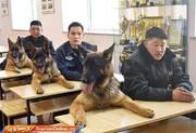 تصاویر | مشاغل جالب سگها، از پلیس و مکانیکی تا فروش پوشاک آقایان!