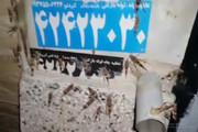فیلم | ملخها به ۱۰۰ کیلومتری تهران رسیدند