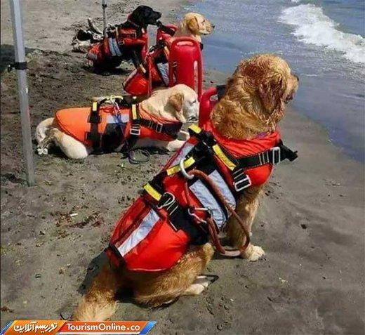 سگ های نجات غریق