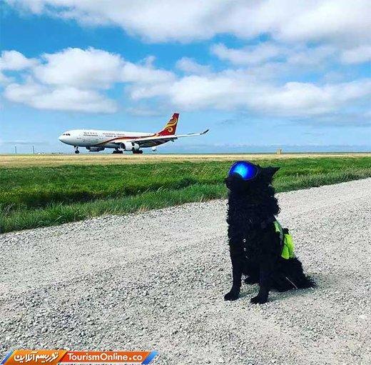 مسئول ترساندن پرنده های مهاجر در فرودگاه ونکوور که هواپیما ها را دچار مشکل نکنند